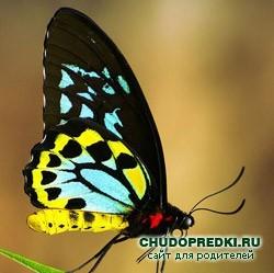 http://www.chudopredki.ru/uploads/posts/2009-09/1253877941_babochka1.jpg