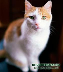 Сапожнику две полосатые кошки На ножки свои заказали сапожки: - Пожалуйста, сшейте скорее дружок, На каждую ножку