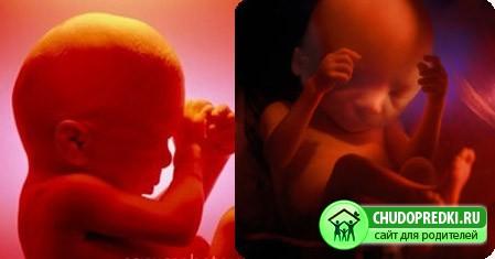 С какой недели беременности ребенок жизнеспособен