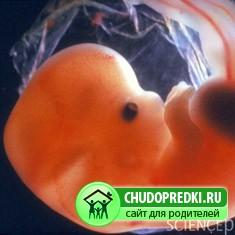 6-7 недели беременности