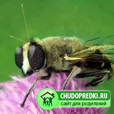 Пчелка и червячок