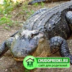 про крокодила
