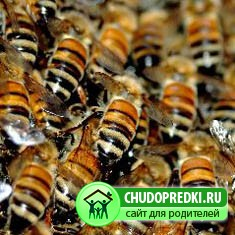 Про пчёл