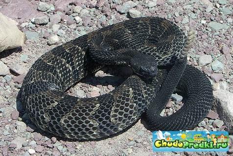 ...Комментарии - 2013 год какого животного черная водяная змея новый год.