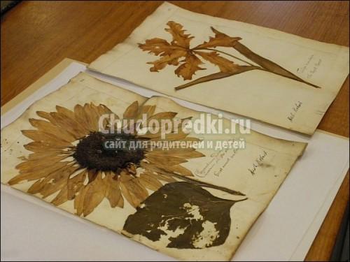 Гербарий из листьев и цветов своими руками - Как красиво сделать и оформить гербарий из листьев, фото и