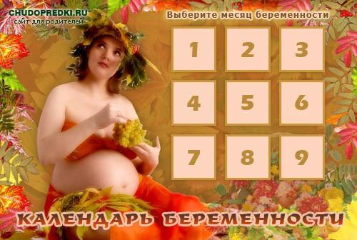 Календарь беременности по месяцам. Наш сервис
