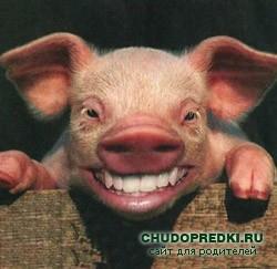 Анекдоты про свиной грипп