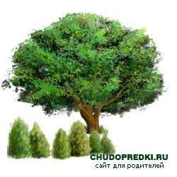 Английские стихи о деревьях