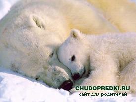 Стихи на английском языке о животных. Медведи