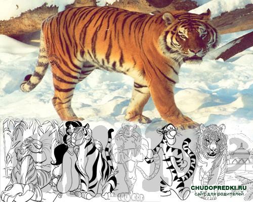 раскраска тигр рисунок