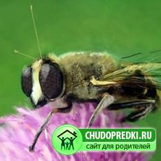 Стихи про труд. Пчелка и червячок