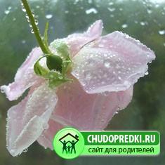 Смолой дождя с небес сползает лето