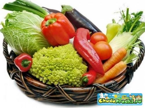 Введение овощного прикорма в питание