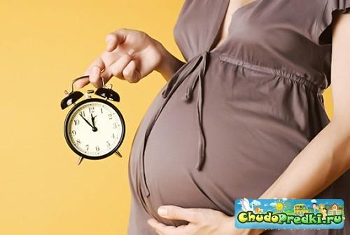 как определить дату зачатия ребенка