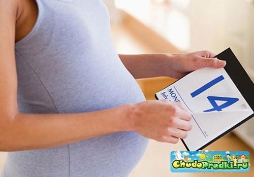 определение даты зачатия ребенка