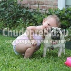 Собаки породы Мопс. Краткая характеристика