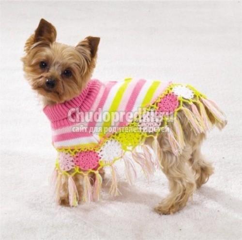 Вязание для собак своими руками