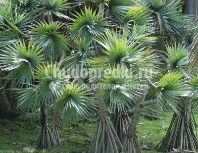 Как сделать пальму своими руками
