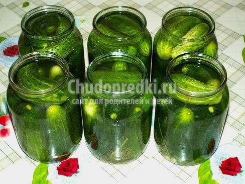 Cоленые огурцы на зиму: популярные рецепты с фото