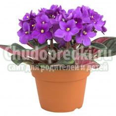 Цветущие комнатные растения. Лучшие варианты для вашего дома