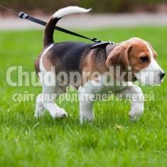 Как выгуливать собаку? Полезные советы по выгулу