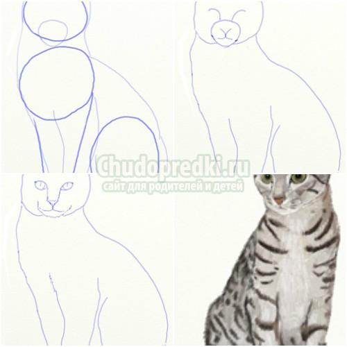 Как нарисовать кошку карандашом поэтапно: пошаговые мастер-классы с фото