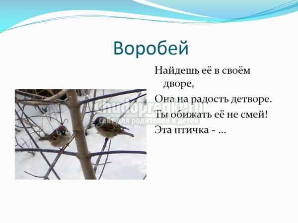 Загадки про птиц для детей