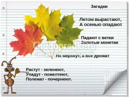 Детские загадки про листья с ответами