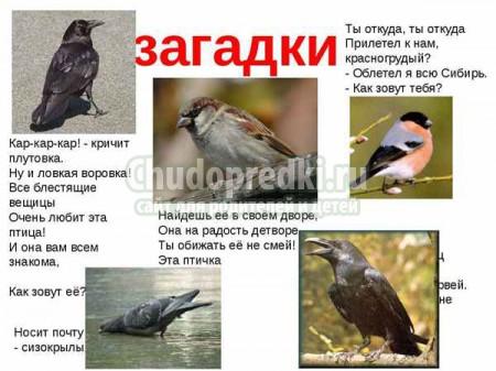 Загадки про птиц для детей с ответами. 40 лучших