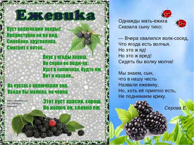 Стихи про ягоды для детей дошкольников и младших школьников. ТОП - 30 лучших