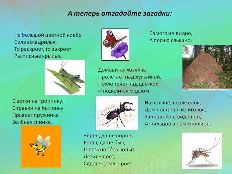 Лучшие Загадки про насекомых для детей 3-4-5 лет с ответами. ТОП -100